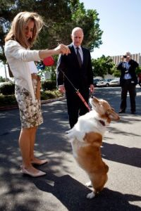 GOVERNOR BROWN_Dog Sutter 01