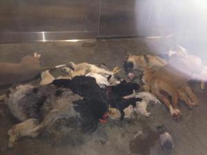 LA Animal Services Dead Dogs Frozen on Floor